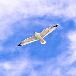 ציפור על רקע השמים